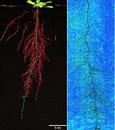 RhizoTron根系(表型)观测系统