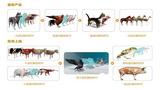 動物系列3D虛擬解剖軟件