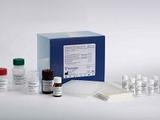 人A组链球菌菌壁多糖抗体(ASP)ELISA试剂盒