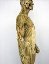 艺用人体模型 美术用人体模型