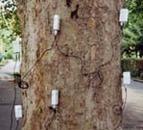 ARBOTOM?脉冲式树木断层成像仪