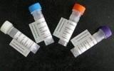 羊抗牛IgG(免疫血清),162039-0.5ML