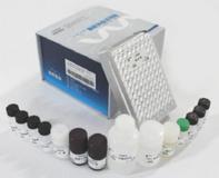 大鼠凋亡相关因子(FAS/CD95)ELISA试剂盒