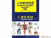 人體解剖學彩色掛圖、消化系統掛圖