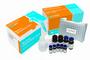 黄曲霉毒素M1检测试剂盒(0.05ppb)