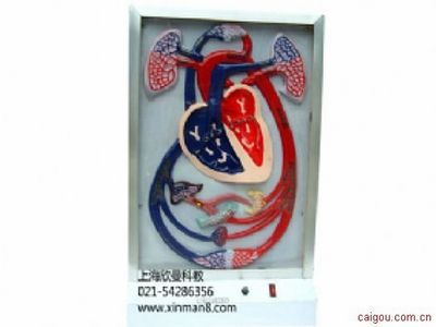 心脏搏动与血液循环电动模型