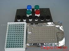 大鼠白血病抑制因子(LIF)ELISA试剂盒