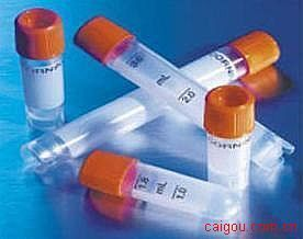 α平滑肌肌动蛋白(α-SMA)单抗