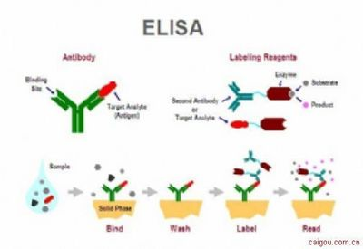 大鼠碱性磷酸酶(ALP)ELISA试剂盒批发