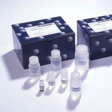 大鼠透明质酸(HA)ELISA试剂盒