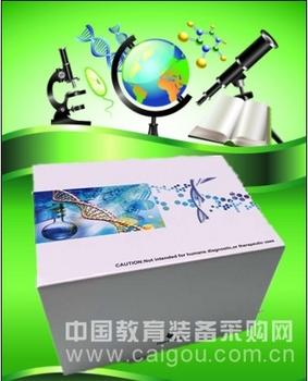 胰岛素,小鼠胰岛素受体β(ISR-β)ELISA试剂盒