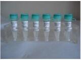 进口标准品CAS号:19685-09-7标准品10-羟基喜树碱