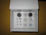 血纤蛋白原ELISA试剂盒厂家代测,进口人(Fbg)ELISA Kit说明书