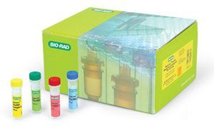 大鼠的神经营养因子-3 ELISA试剂盒 NT-3(r) ELISA kit