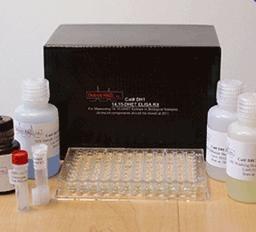 大鼠抗增殖细胞核抗原抗体(PCNA)ELISA Kit
