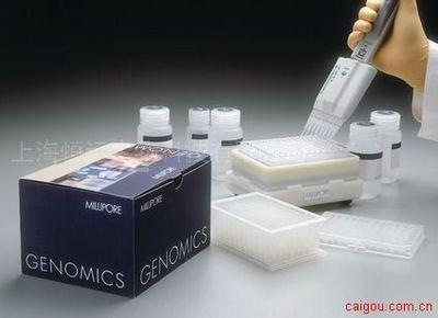 人抗肌内膜抗体IgA ELISA试剂盒
