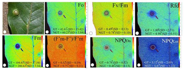 FluorCam叶绿素荧光成像系统(封闭式)助力中科院动物所 昆虫作物互作研究