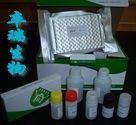 小鼠白介素11(IL-11)Elisa试剂盒