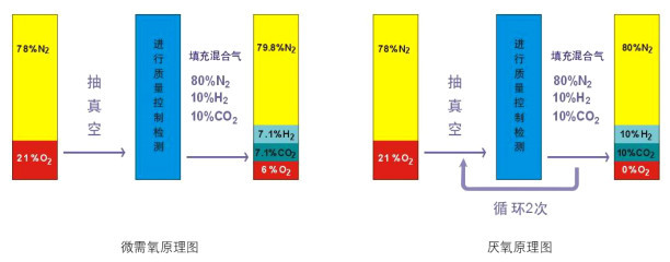 香港DW微生物科技100A-K型 智能厌氧微生物培养系统