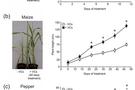 FluorCam叶绿素荧光系统发表文献选录(十四)—病原微生物发散的挥发性化合物促进植物生长与开花