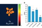 FluorCam叶绿素荧光系统发表文献选录(十六)  ——抗除草剂基因在自然界的遗传搭车现象