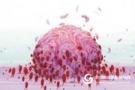中国团队巧用免疫细胞运输药物对抗恶性脑瘤