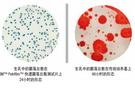 荧光检测仪能够快速检测食品中菌落总数