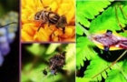 便携式显微镜 助力昆虫现场研究