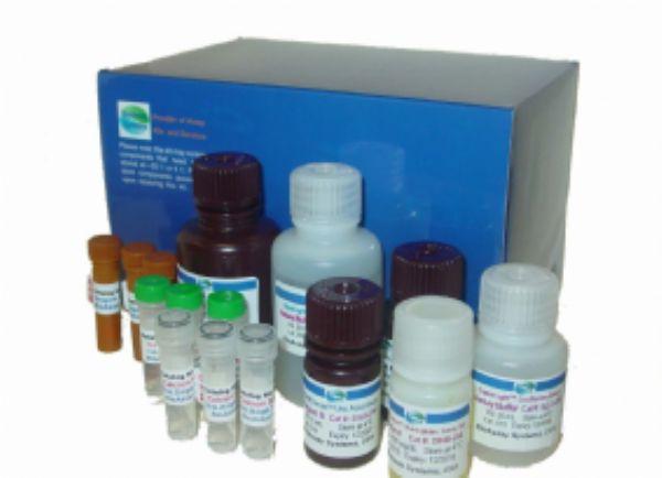 猪雌激素(E)ELISA试剂盒