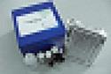 代测植物吲哚乙酸(IAA)ELISA试剂盒价格