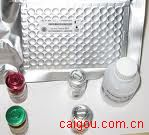小鼠瘦素(mouse Leptin )ELISA kit